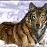 Tiger-Wolf